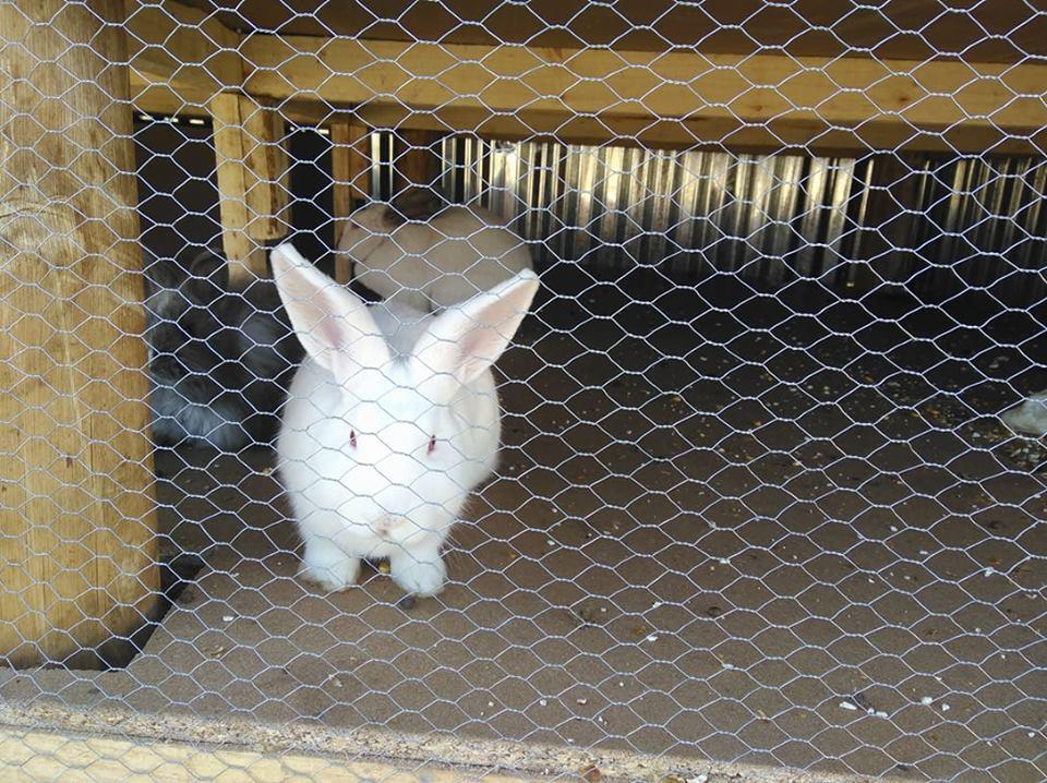 Zenzeleni Animal Farm